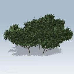 Rectangular-Bush