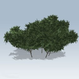 Rectangular-Bush