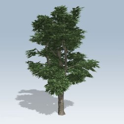 Tree-Medium